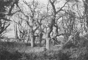 Paysage des « terres rouges à châtaigniers ». Une châtaigneraie à Saint-Romain-en-Charroux. (Cl. Jean-Jacques CHEVRIER). »
